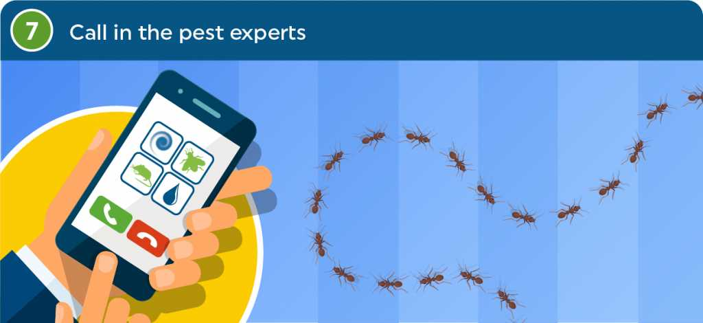 Call the experts at ClearFirst Pest Control