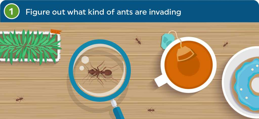 Figure out what kind of ants are invading