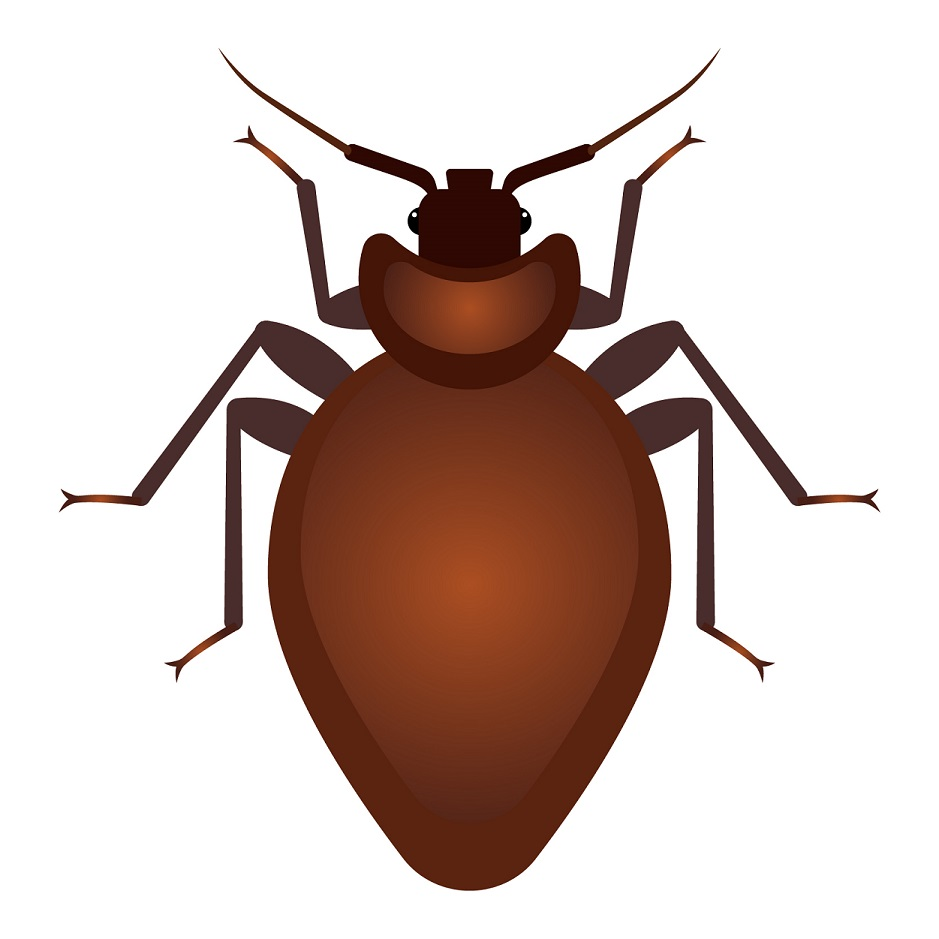 types of pest glossary - bed bug