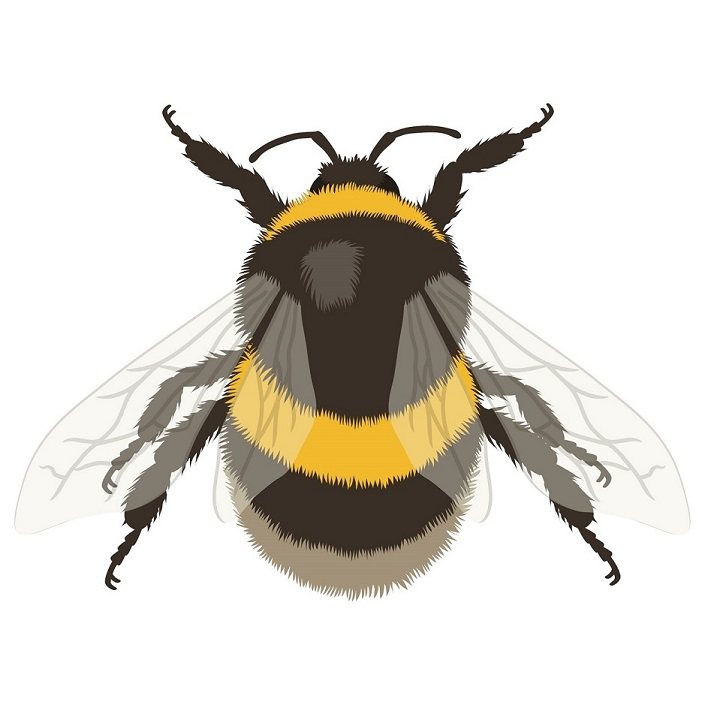 types of pest glossary - bee