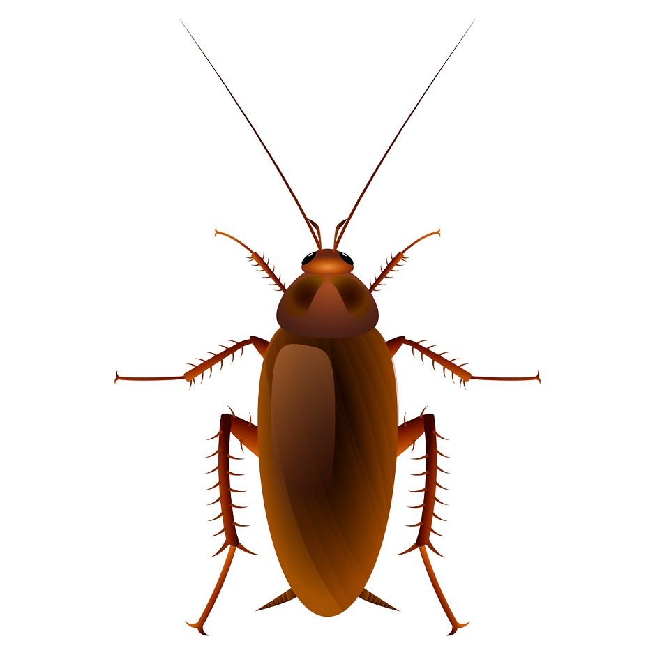 types of pest glossary - cockroach