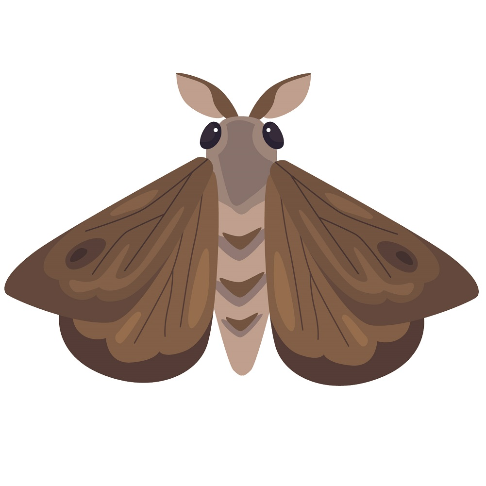 types of pest glossary - moth