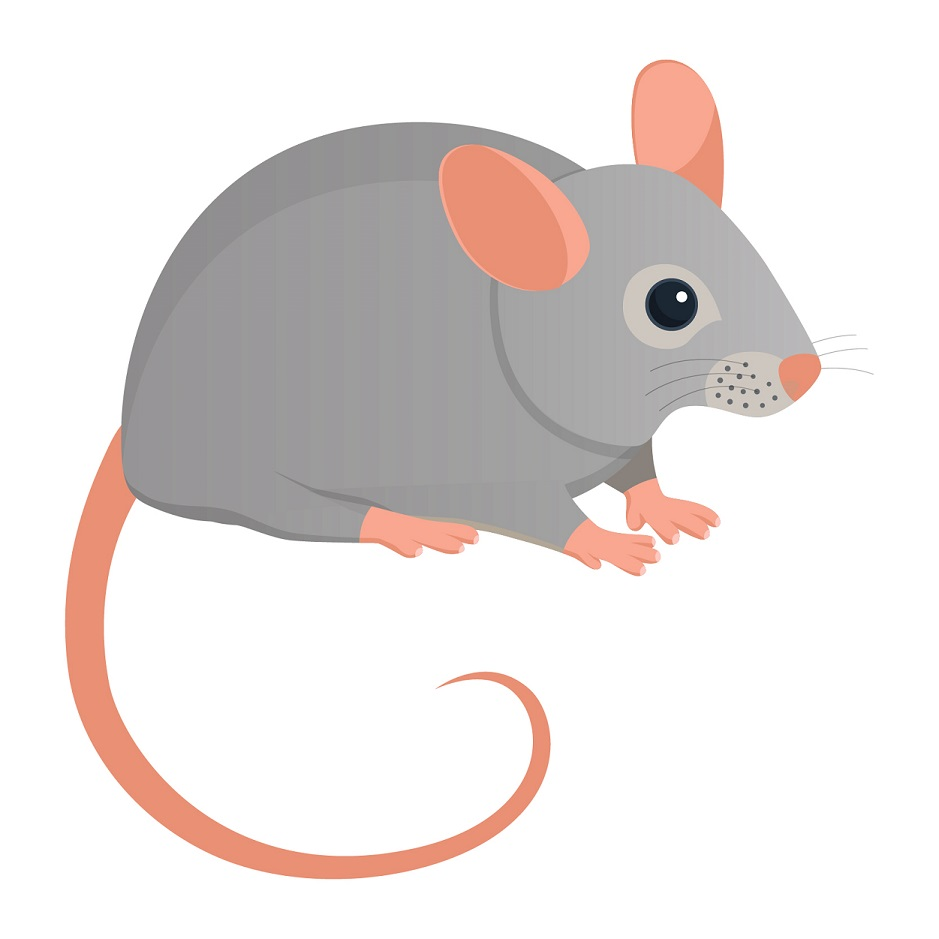 types pf pest glossary - mouse