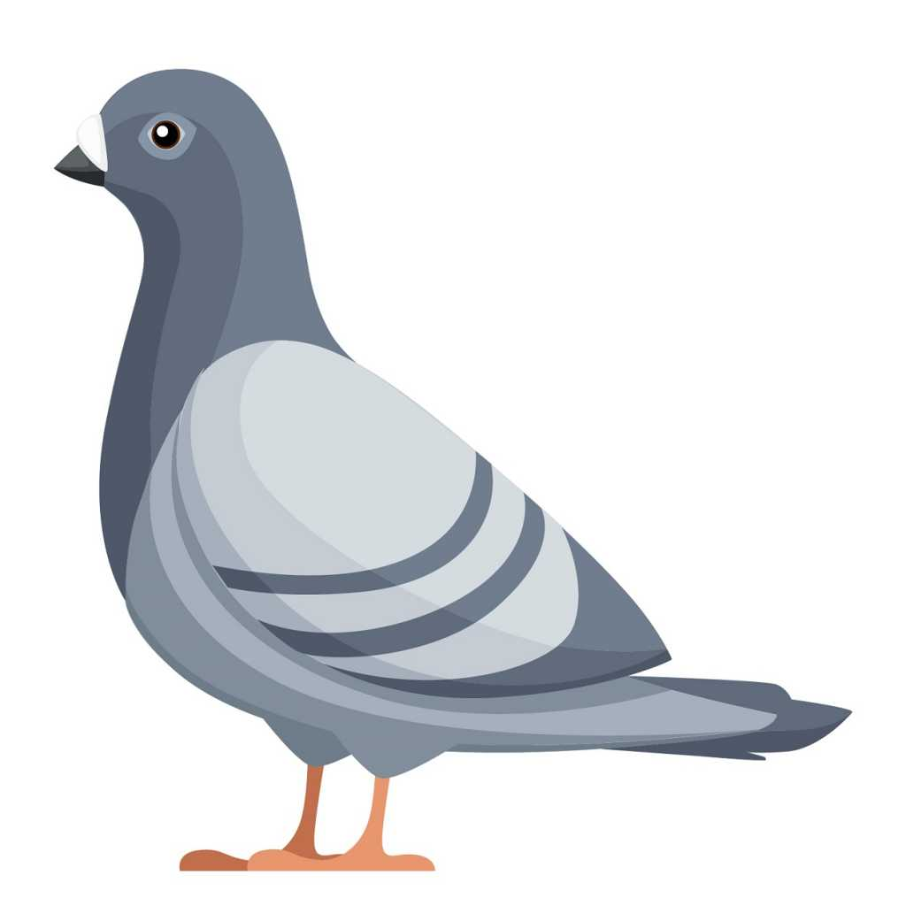types of pest glossary - pigeon