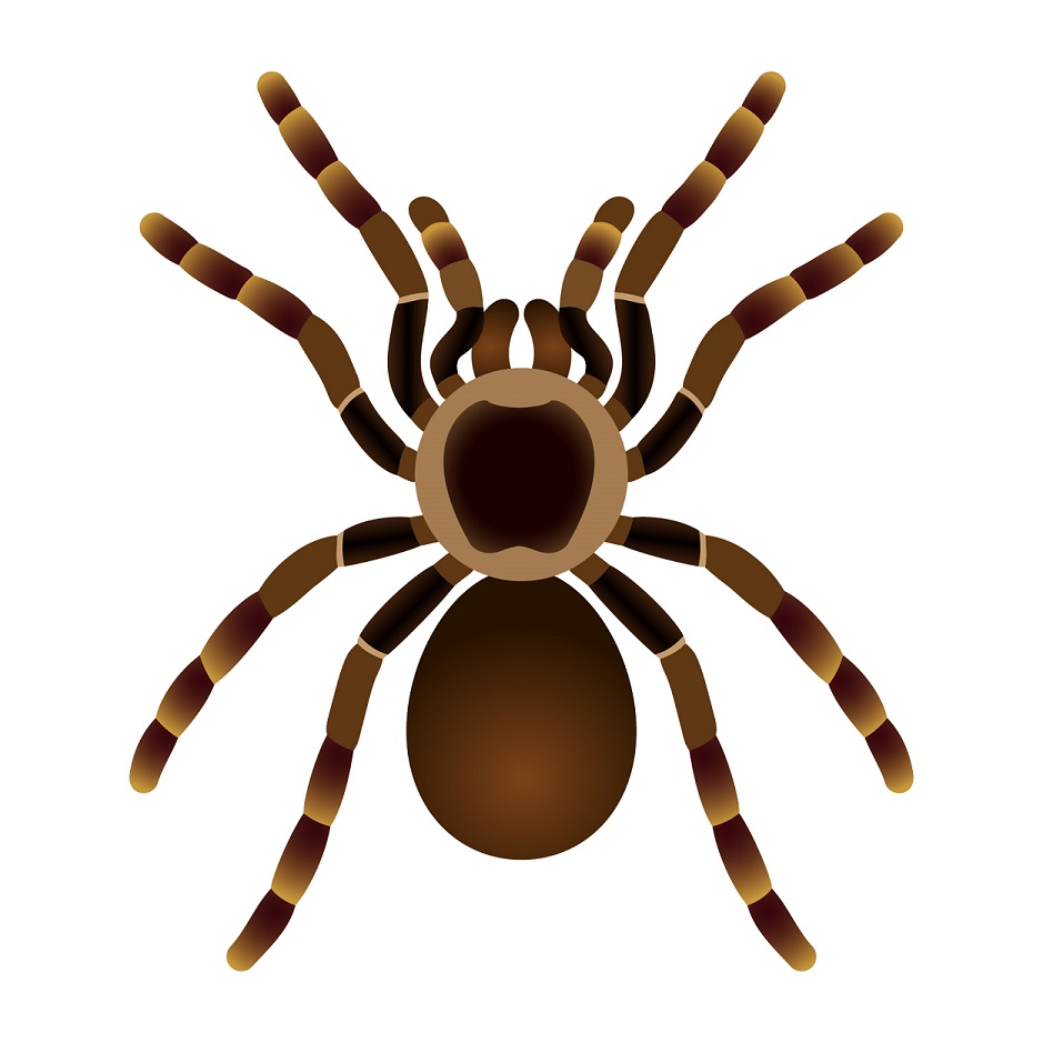 types of pest glossary - spider